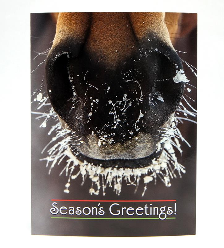 Frosty Nose Christmas Card Set,BX FROSTY